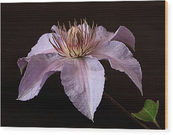 Clematis Wood Print by Shirley Mitchell
