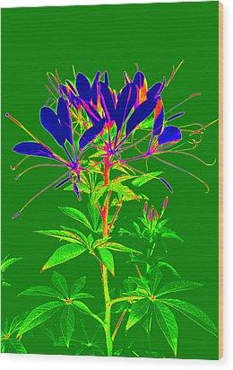 Cleome Gone Abstract Wood Print by Kim Galluzzo Wozniak