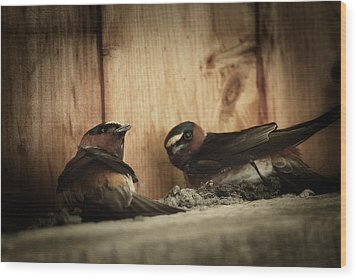 Cliff Swallows 3 Wood Print by Scott Hovind