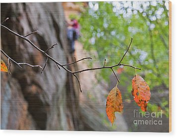 Climber In Fall Wood Print