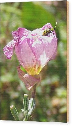 Climbing The Mexican Evening Primrose Wood Print