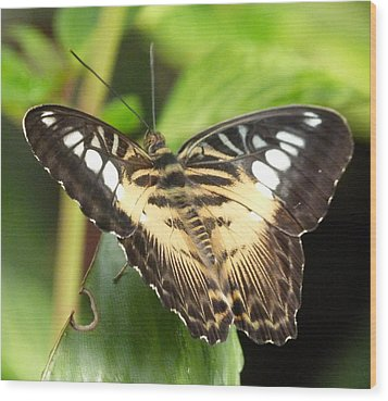Wood Print featuring the photograph Clipper Butterfly by Lynn Bolt