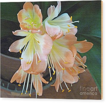 Clivia Wood Print by Louise Peardon