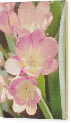 Clivias Wood Print by Gilbert Artiaga