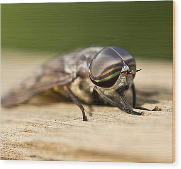 Close Encounter With A Horsefly Wood Print by Dean Bennett