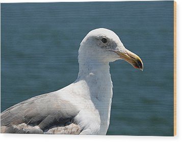 Close Seagull Wood Print by Wendi Curtis