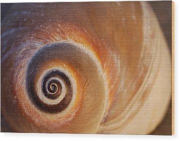 Close Up Of A Moon Snail Shell Showing Wood Print by Darlyne A. Murawski