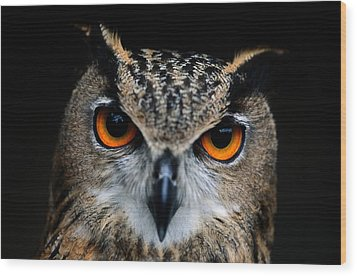 Close Up Of An African Eagle Owl Wood Print by Joel Sartore