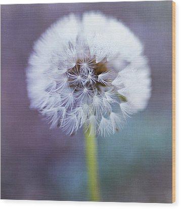Close Up Of Dandelion Flower Wood Print by Pamela N. Martin