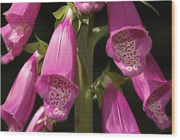 Close Up Of Foxglove Digitalis Flowers Wood Print by Darlyne A. Murawski