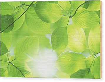 Close-up Of Fresh Green Leaves Wood Print by Imagewerks
