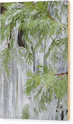 Close-up Of Ice Covered Tree Branch Wood Print by James Forte