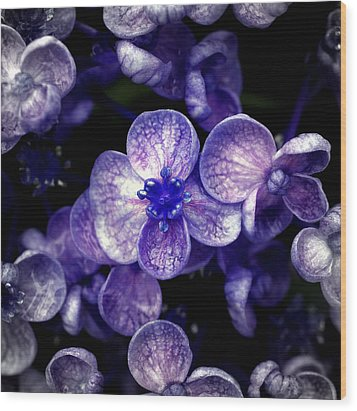 Close Up Of Purple Flowers Wood Print by Sner3jp