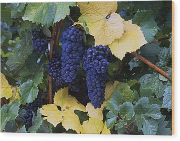 Close-up Of Ripe, Wine Grapes And Leaves Wood Print by Natural Selection Craig Tuttle