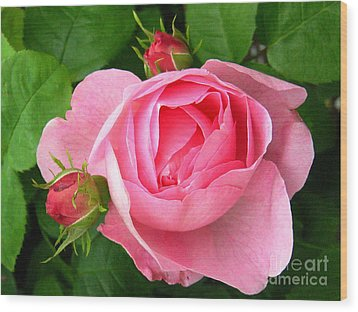 Rose And Rose Buds Wood Print