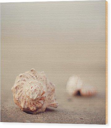 Close Up Of Shells On Beach Wood Print by COPYRIGHT© Marianna Di Ferdinando