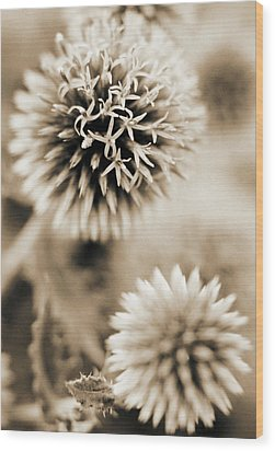 Close-up Of Spiky Plants Wood Print by Andrea Sperling