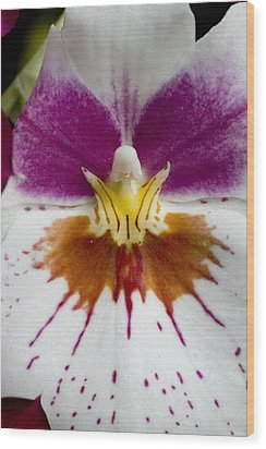 Close-up Of The Center Of An Orchid Wood Print by Todd Gipstein