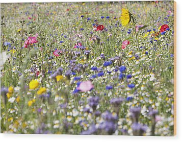 Close Up Of Vibrant Wildflowers In Sunny Field Wood Print by Echo