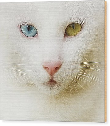Close Up Of White Cat Wood Print by Blink