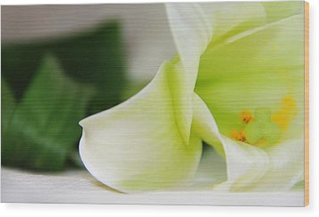 Close-up On White Lilies Wood Print by Gal Ashkenazi