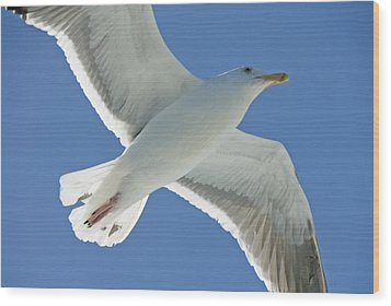 Close View Of A Flying Seagull Wood Print by Stephen Sharnoff