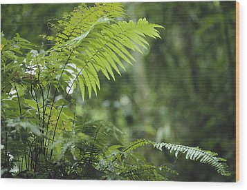 Close View Of Ferns In A Papua New Wood Print by Klaus Nigge