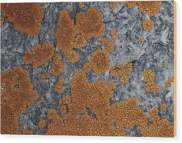 Close View Of Orange Lichen Growing Wood Print by Stephen Sharnoff