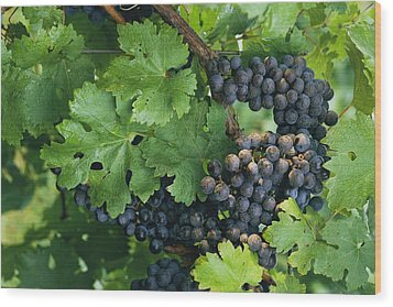 Close View Of Red Grapes On The Vine Wood Print by Kenneth Garrett