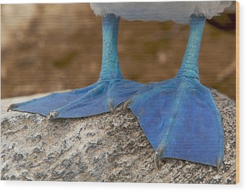 Close View Of The Feet Of A Blue-footed Wood Print by Tim Laman
