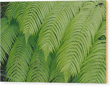 Close View Of Tree Ferns Cibotium Wood Print by Marc Moritsch