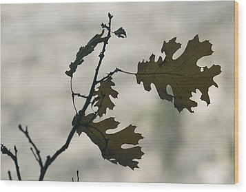 Close View Silhouette Of A California Wood Print by Marc Moritsch