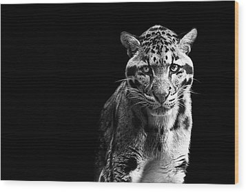 Clouded Leopard Wood Print by Malcolm MacGregor
