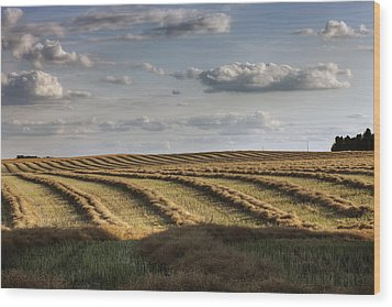 Clouds Over Canola Field On Farm Wood Print by Dan Jurak