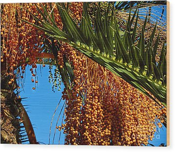 Wood Print featuring the photograph Cluster Of Dates On A Palm Tree  by Alexandra Jordankova