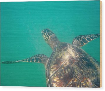 Clyde The Hawaiian Sea Turtle Wood Print by Erika Swartzkopf