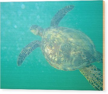Clyde The Sea Turtle Wood Print by Erika Swartzkopf