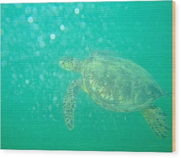 Clyde The Turtle Three Wood Print by Erika Swartzkopf