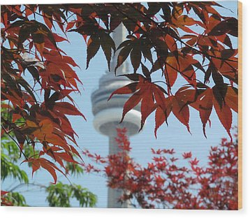 Cn Tower With Japanese Maple Wood Print by Alfred Ng
