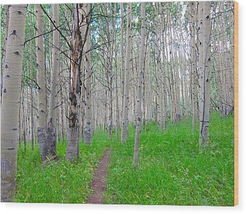 Co Aspen Mtn.bike Trail Wood Print by Kathryn Barry