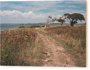 Coastal Path Wood Print by Shirley Mitchell