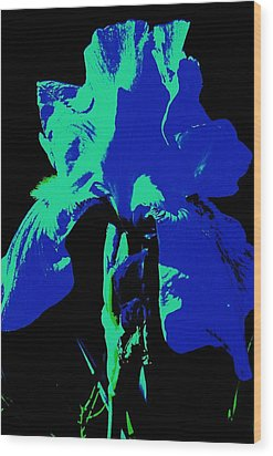 Cobalt Iris Wood Print by Todd Sherlock