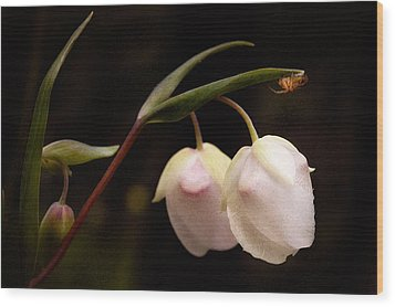 Wood Print featuring the photograph Cobra Lilly by Gary Rose