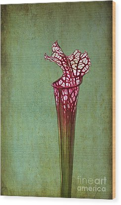 Cobra Lily Wood Print