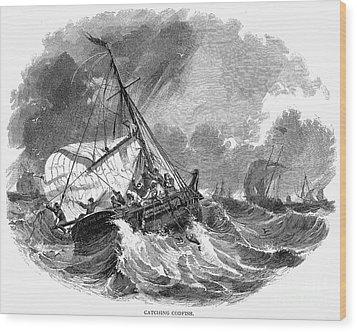 Cod Fishing, 1876 Wood Print by Granger