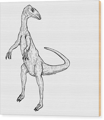 Coelophysis - Dinosaur Wood Print by Karl Addison