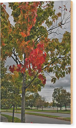 Wood Print featuring the photograph Cold Autumn Breeze  by Michael Frank Jr