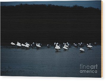 Cold Duck Wood Print by Lisa Holmgreen