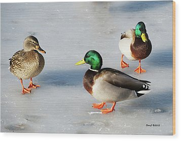 Cold Ducks Wood Print by Stephen  Johnson