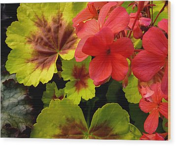 Wood Print featuring the photograph Coleus And Impatiens Blooms by Cindy Wright